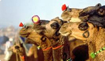 Rajasthan Culture Tours India | Rajasthan Tourism India | Scoop.it