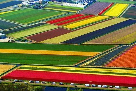 荷兰农业概况 | glObserver Global Economics | glObserver Europe | Scoop.it