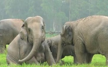 Daily Cute: Elephants Play in the Rain for the First Time | fitness, health,news&music | Scoop.it