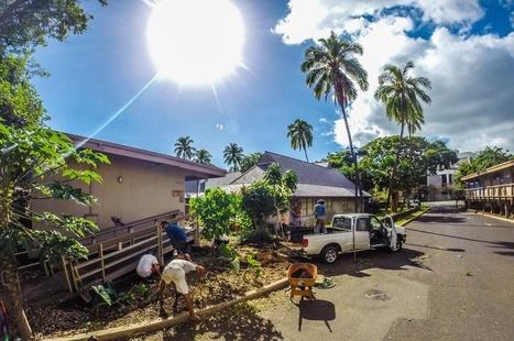 How Urban Farming Could Change Hawaii   Peer2Politics   Scoop.it