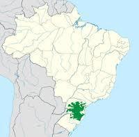 Floresta de Araucárias | Biologia diario | Scoop.it