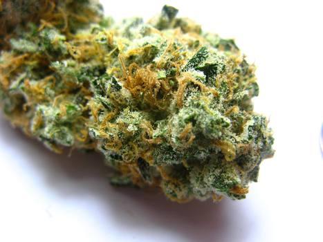 A Myth-Shattering Look at Medical Marijuana's Impact on Human Health | calynng94 | Scoop.it