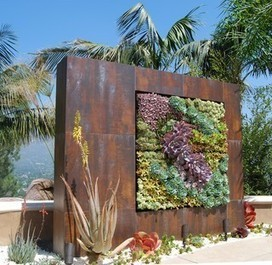 A Succulent Wall - contemporary - landscape - los angeles - by BlueGreen Landscape Design | Pool Building | Scoop.it
