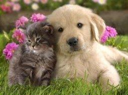 Information on Frontline Plus for Dogs Flea Medication for Dogs | Frontline Plus | Scoop.it