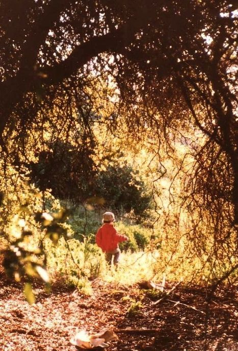 Do Early Experiences in the Natural World Help Shape Children's Brain Architecture? | Arrival Cities | Scoop.it