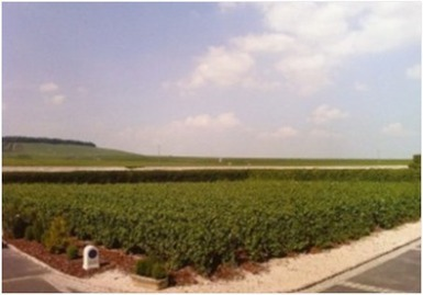 France Wine Tours: VeuveFourny-a Champagne of the Moment | Wine Education | Wine Tour | Wine Consultant | Scoop.it