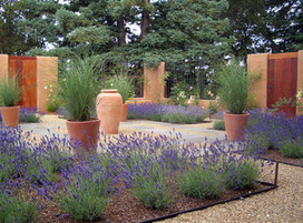 Xeriscape Gardens: How to Get a Beautiful Landscape With Less ... | Gardening is more than Digging the Dirt | Scoop.it