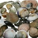 Fish and Shellfish Apprenticeships Soar Thanks to Seafish and ESTC Partnership   Aquaculture Directory   Aqua-tnet   Scoop.it