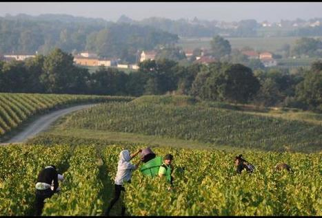 Why Loire Valley Wines Will Ramp Up In Popularity | Wines of Bordeaux and south-west France | Scoop.it