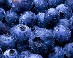 Can Eating Blueberries Really Help You See Better In The Dark?   Food Safety Consultant   Scoop.it