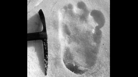 DNA Links Mysterious Yeti to Ancient Polar Bear   Ancient Civilization   Scoop.it