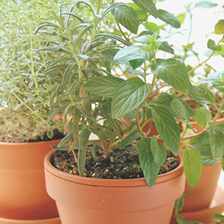 The Best Herbs for Growing Indoors: Organic Gardening | Wholesome Food Association | Scoop.it