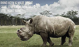 Ad campaign aims to reduce Vietnamese demand for rhino horn | Kruger & African Wildlife | Scoop.it