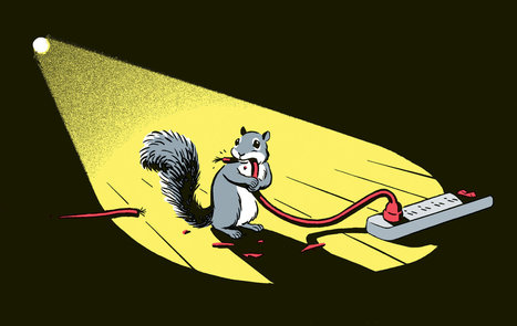 Squirrel Power! | New York (NY) Times | CALS in the News | Scoop.it