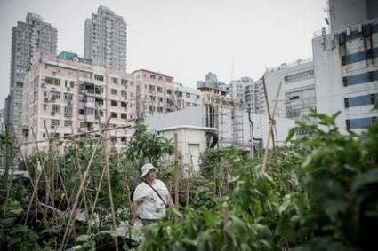 Rooftop farms flourish in space-starved Hong Kong | Societal Resilience, Mobility, Living, Logistics, Infrastructure | Scoop.it