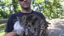A Normal Sunday Afternoon Walk Led To An Unexpected Kitten Rescue | Catnip Daily | Scoop.it
