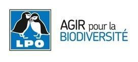 Philippe MARTIN prend deux arrêtés défavorables aux oiseaux ! - Communiqué - LPO (Ligue pour la Protection des Oiseaux) | Rescoop -Faune - Flore - Environnement | Scoop.it