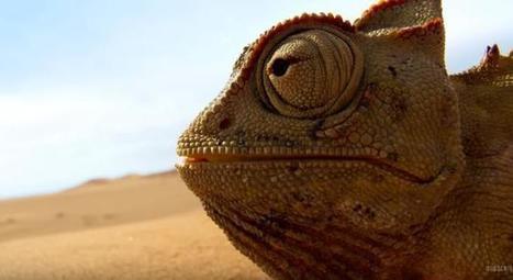 Watch The Jaw-Dropping Trailer For 'Planet Earth II' | Kool Look | Scoop.it