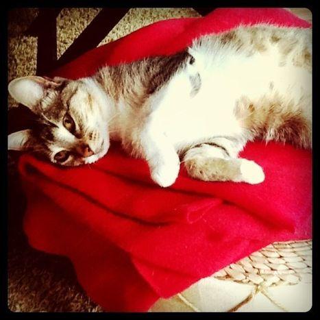 Cat Behavior | Cat Stuff | Scoop.it