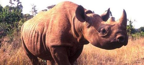 Hunting wildlife trade online | IFAW | Wildlife Trafficking: Who Does it? Allows it? | Scoop.it