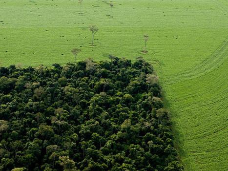 Déforestation : tout savoir sur la déforestation : Geo.fr | S.V.T : l'Homme responsable de son environnement | Scoop.it