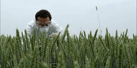 OGM: un Belge lauréat du Prix Mondial de l'Alimentation - lalibre.be | Abeilles, intoxications et informations | Scoop.it