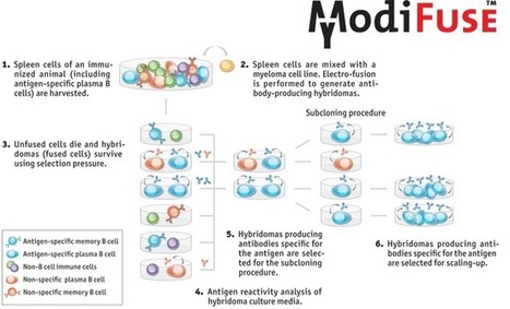 research paper on monoclonal antibodies