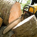 First class tree cutting in Wanatah, IN by A Clean Cut Tree Service | A Clean Cut Tree Service | Scoop.it