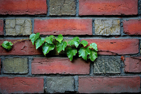 Infiltrating the Walled Garden | Online Learning | HYBRID PEDAGOGY | Educación flexible y abierta | Scoop.it