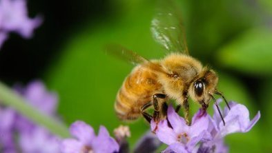 Bad winter sees 'huge loss of bees' | Apiculture et protection de l'environnement | Scoop.it