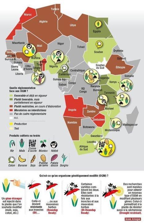 La carte d'Afrique des OGM - JeuneAfrique.com | Afrique: développement durable et environnement | Scoop.it