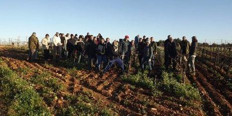 Florensac : l'apprentissage de la taille de la vigne se fait sur le terrain   Actus en LR   Scoop.it