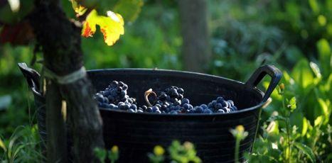 In vino veritas: réinventer la stratégie dans les écoles de management | The Kore ! | Scoop.it