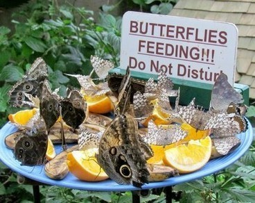 Niagara Parks Butterfly Conservatory To Host We Are The Insects Exhibit | GarryRogers Biosphere News | Scoop.it
