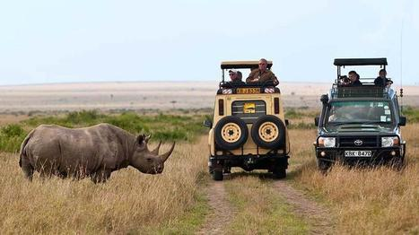 What is the Best Time to Visit Masai Mara? | Africa Safaris | Scoop.it