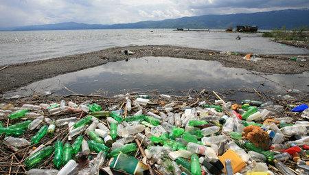 Even barnacles eat ocean plastic | Sustain Our Earth | Scoop.it