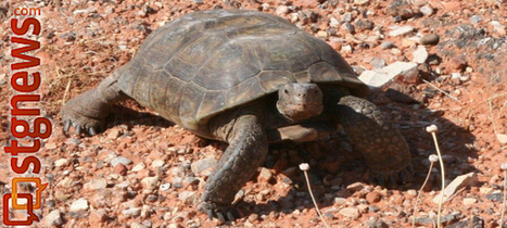 Desert tortoise 101: History, conservation efforts; rules for safe, enjoyable ... - Dixie Press Online | Conservation Biology, Genetics and Ecology | Scoop.it
