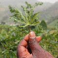 More African nations hit agricultural investment target - SciDev.Net | Bugs have benefits | Scoop.it