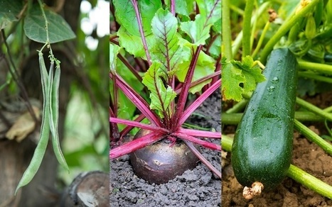 18 Of The Fastest Growing Veggies You Can Harvest In No Time | Sustain Our Earth | Scoop.it