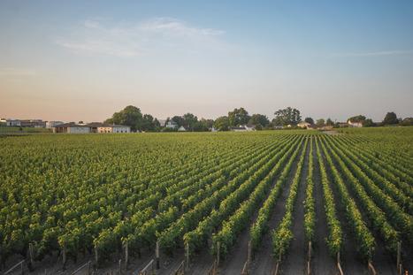 Réduire l'usage puis sortir des pesticides, c'est possible | Santé en Aquitaine | Scoop.it