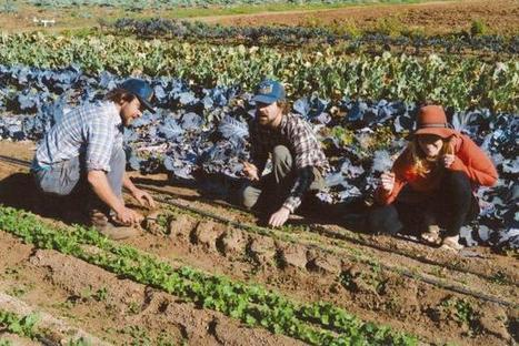 How Will We Grow New Farmers? | CUESA | Permaculture, Horticulture, Homesteading, Bio-Remediation, & Green Tech | Scoop.it
