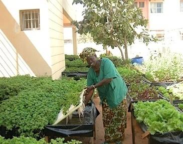 Agriculture Urbaine Et Périurbaine Pour La Sécurité Alimentaire En ...   Projets de développement   Scoop.it