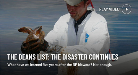 #BreakingNEWS An absolute disaster including the #dispersant #NRDC ~ Still goes on! | Rescue our Ocean's & it's species from Man's Pollution! | Scoop.it