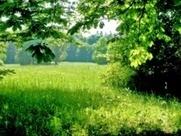 La exposición a la naturaleza mejora la salud porque potencia el sistema inmune | Salud&Medicina | Scoop.it