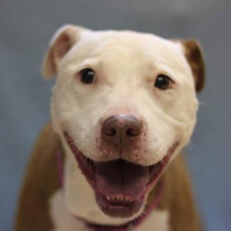 Pets of the Week: Area shelters offer cats and dogs for adoption | cats & dogs! | Scoop.it