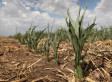 Six Steps to Food Security in a Seven-Billion World - Huffington Post (blog) | Earth, our Sweet Home! | Scoop.it