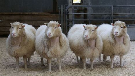 Dolly's sheep clones are doing just fine | Nerd Vittles Daily Dump | Scoop.it