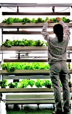 Agri-Cube grows mass quantities of vegetables in a one-car parking spot | Longevity science | Scoop.it