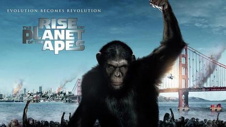Planète des singes : êtes-vous aussi intelligent(e) qu'eux ?   Beyond the cave wall   Scoop.it