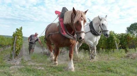 Terroir et Tempête ont remplacé le tracteur | Elevage | Scoop.it